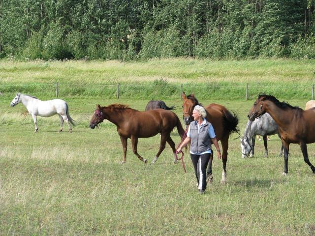 Susanna auf Pferdeweide